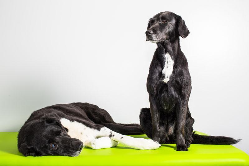 Hundephysiotherapie in Filderstadt