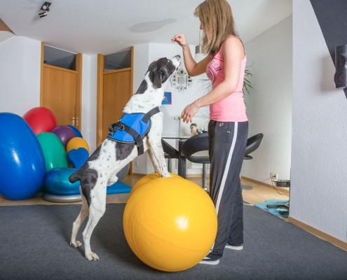 aktive-bewegungstherapie-erdnussball-gelb