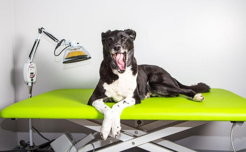 Hund müde nach Lymphdrainage