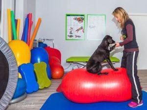 Hundephysiotherapie Aktive Bewegungstherapie für Hunde