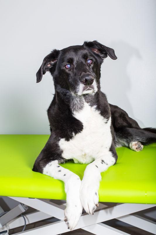Therapieangebote Hundephysiotherapie
