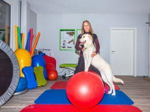 Hundephysiotherapie Praxis Filderstadt