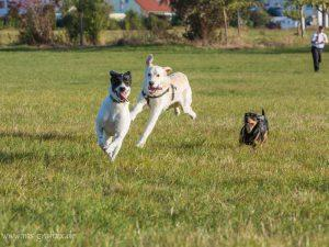 Hundesitter Hundepension Filderstadt