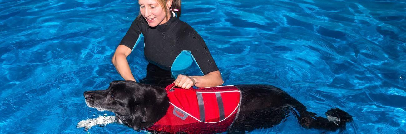 Therapeutisches Hundeschwimmen