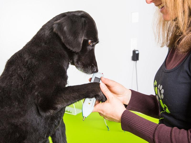 Laserakupunktur Hund