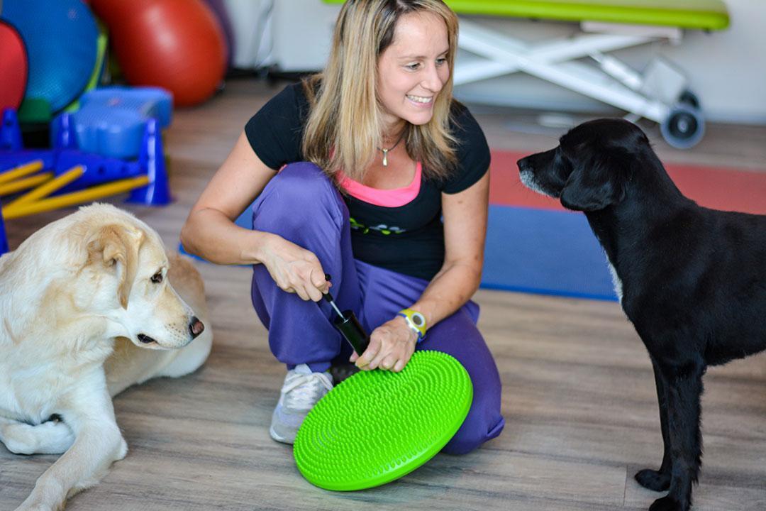 Hundephysio Gerät Balancekissen