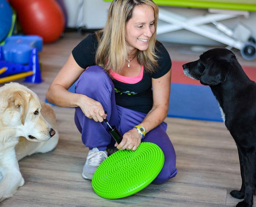 Hundephysiotherapie Gerät Balancekissen