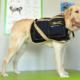 Hund bei der Wärmetherapie mit Wärmemantel