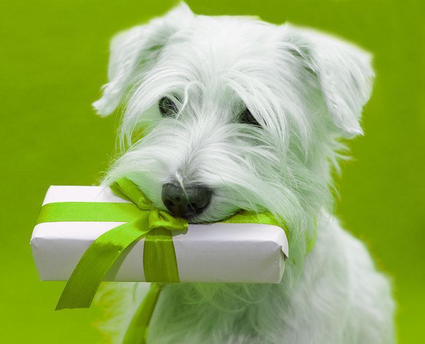 Hund Geschenke Gutscheine